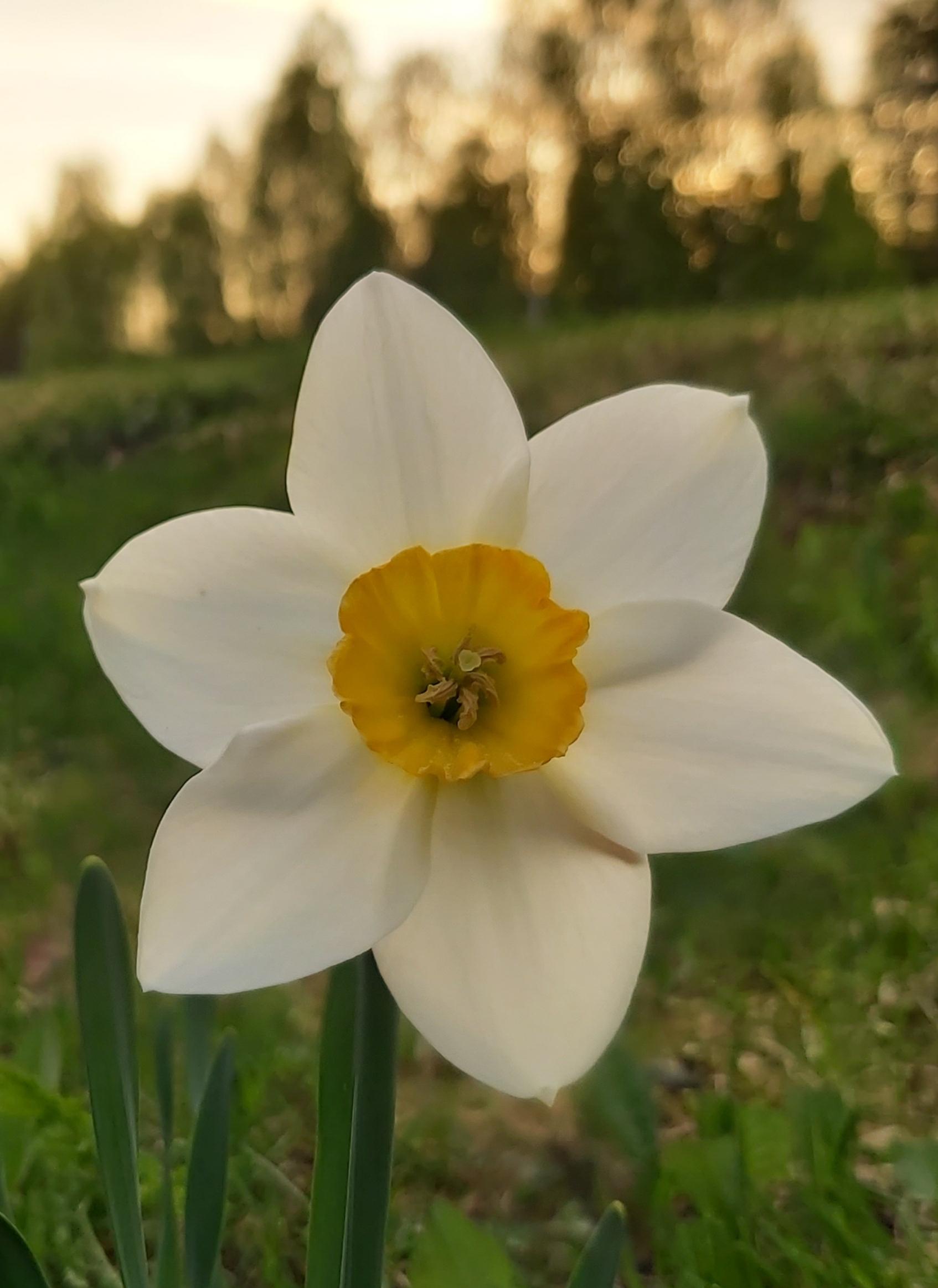 Kevätjuhla